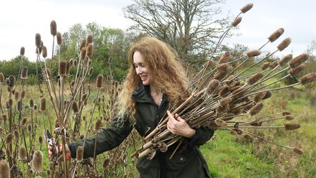 Sue Narbett gathering teasels