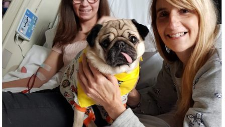 Alfie is a therapy dog who visits children in hospital