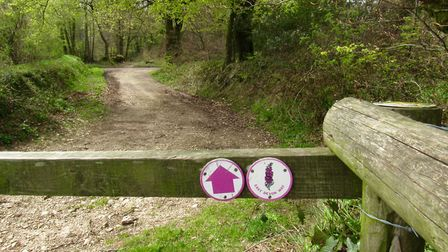 The East Devon Way near Fire Beacon Nature Reserve; the logo of this path is a pink foxglove. Photo: Simone Stanbrook-Byrne