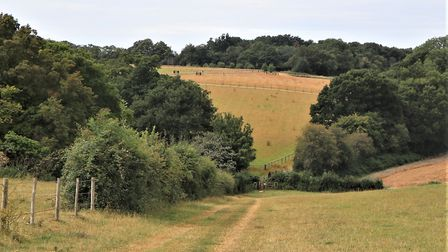Towards Chipperfield Common from the Hertfordshire Way