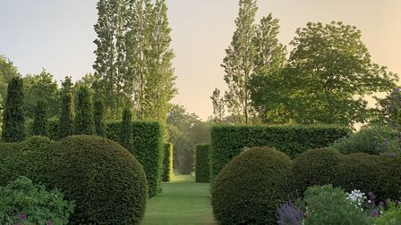 Hedges and trees in the Barn Garden at Serge Hill