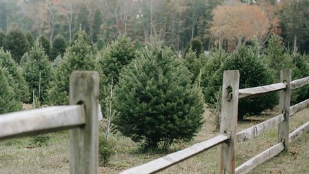 Where to get your Christmas tree in the Cotswolds 2020 (photo: Any Lane, Pexels)
