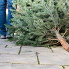 Raise money for Haven House simply by recycling your Christmas tree in January (photo: SKatzenberger