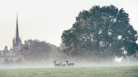 Deer in the mist on an autumn morning at Ashridge House Credit: Claire Zaffin / Alamy Stock Photo