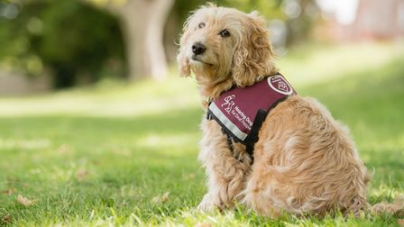 Hearing dogs can change lives Photo: Paul Wilkinson, for Hearing Dogs for Deaf People