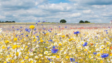 Wildflower meadow at Heartwood Forest (c) Judith Parry
