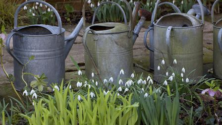 Create vignettes with your snowdrops. Photo: Leigh Clapp