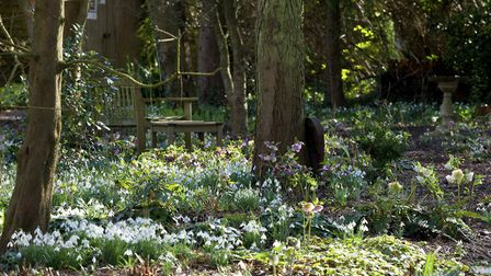 Snowdrops and hellebores at Pembury House. Photo: Leigh Clapp