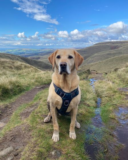Away day dogs Bailey takes a trip to the peak District with owner Nicola Barton
