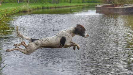 Airborne dogs