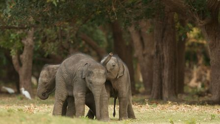Its abundance of wildlife makes Sri Lanka an exciting destination (photo courtesy of Abbotts Travel)