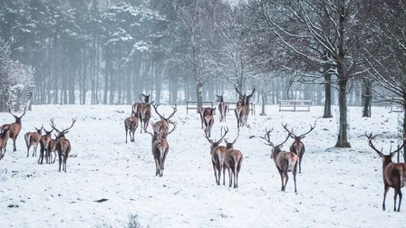 Tatton Park is the perfect place to enjoy a stroll