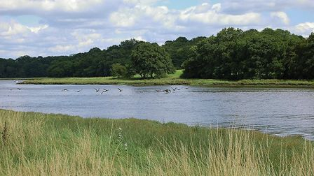 Birds flying over River Hamble by Rob Young (creativecommons.org/licenses/by/2.0) via https://flic.k