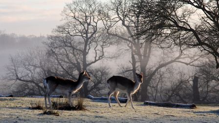 Enjoy a stroll around Knole's 1,000-acre medieval deer park (photo: National Trust/Joe Hatcher)