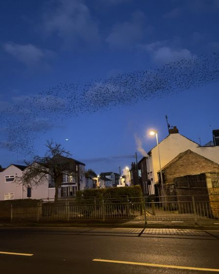 Murmurating starlings in Great Yarmouth