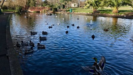 Duck ponds near the seafront