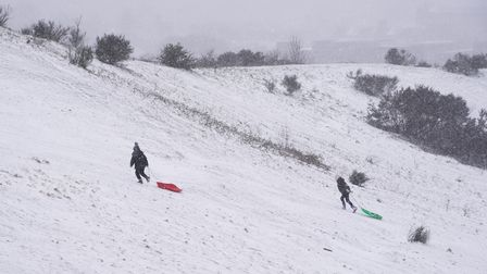 Sledgers on Mousehold Heath in the snow. Picture: Danielle Booden