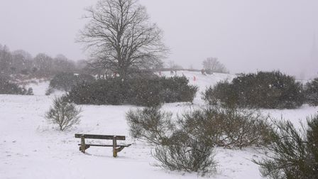 Mousehold Heath in the snow. Picture: Danielle Booden