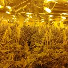 The cannabis farm in Rosina Street, Homerton was raided by police and the London Fire Brigade