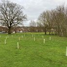 Hertsmere Borough Council is planting trees across the borough.