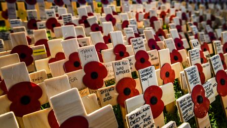 Poppies on crosses dedicated to all who served during a service for the opening of the Field of Reme