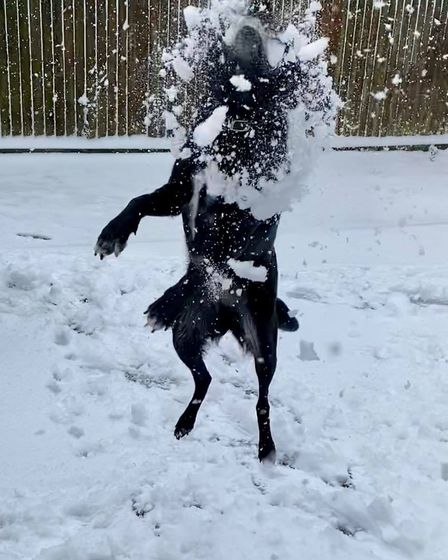 A dog playing fetch in the snow