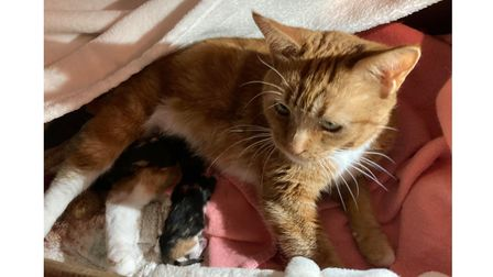 Rescue cat Lola with her kittens