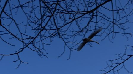 Emily Baker, aged 11, captured this image of a large bird flying over Buckden Marina.