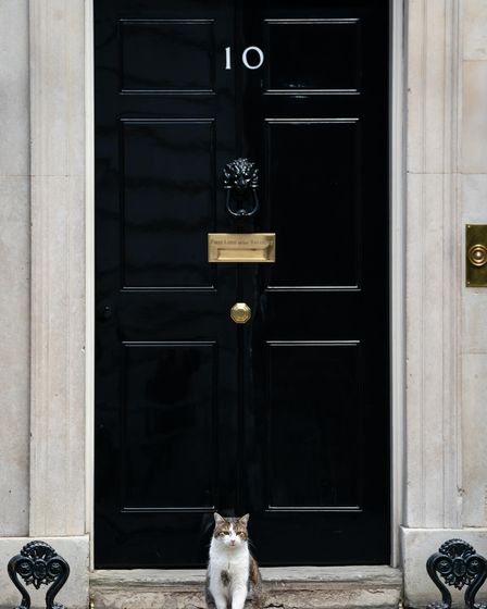 Larry the Downing Street Cat in Downing Street