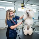 Part-time dog grooming coursenewly available at the Wisbech campus of the College of West Anglia.