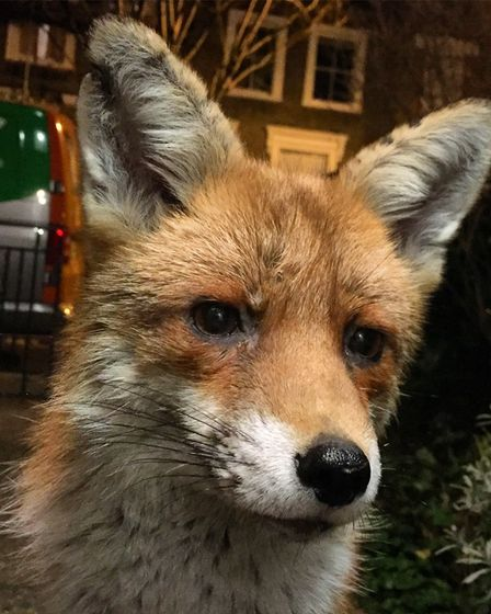 The fox who turned up on Zeb's doorstep turned out to be a vixen who showed him her cubs