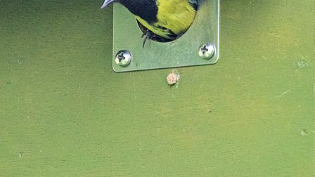 The Friends of Holt Island, in St Ives, have launched a bird box fundraiser.