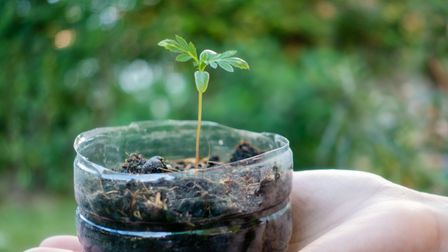 A plastic bottle is the perfect place togrow a seedling.
