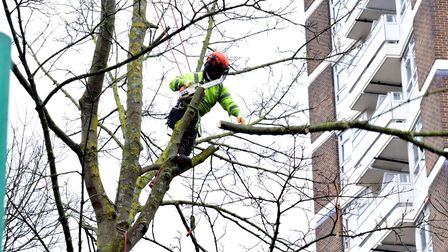 Dixon Clark Court tree removal 18.02.21.The tree cutting continues