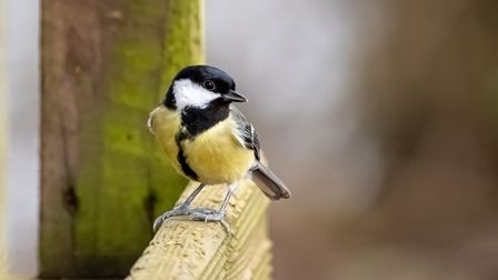 Stuart Buckminster took this photograph at Paxton Pits, in Little Paxton, St Neots.
