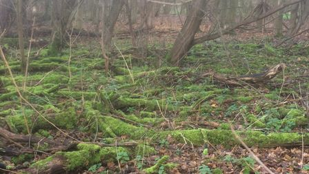 North London is blessed with woodlands