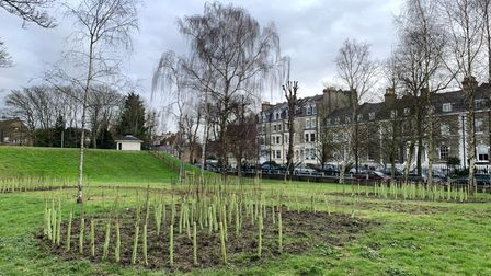 The Dream For Trees project in Highgate