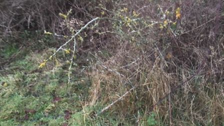 Overgrown ditch in Tydd St Giles