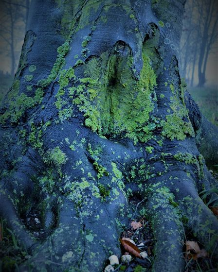 Charlie Grimes' picture of a lichen-covered tree for the Rotary Club of Royston's photography competition