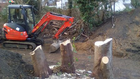 Three trees have been cut down to buildparking