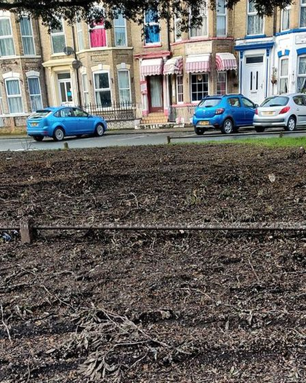 Grass on Kent Square in Great Yarmouth has died since a large flock of starlings began roosting on the trees there.