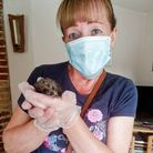 UK Power Networks employee Dianne Laws on a visit to Suffolk Prickles Hedgehogs Rescue
