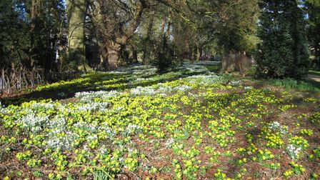 A Spring tapestry of snowdrops and aconites at The Elms in Houghton
