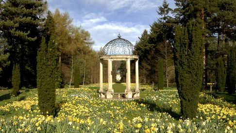 Daffodils at Thorp Perrow Arboretum