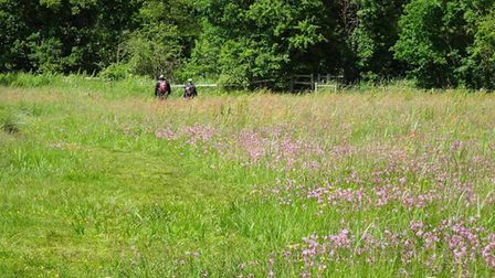 Wildflowers in a meadow managed by Norwich Fringe Project