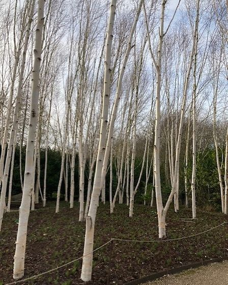Grace Pildtich took this photograph at Anglesey Abbey Gardens.