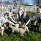 Golden Valley School pupils with lambs