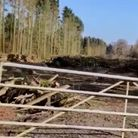 Thousands of trees have been cut down in Luton Lane, near Redbourn.