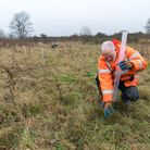 tree planting letchworth