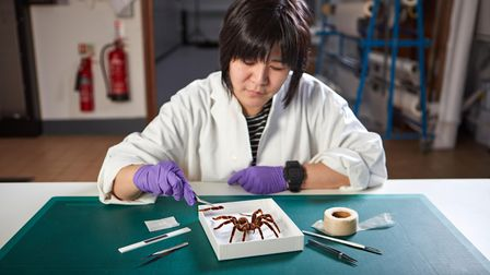 Natural History Museum specialist with spider